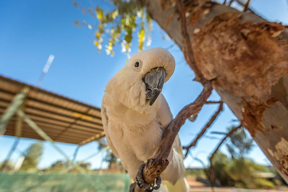 Meet local wildlife like the famous Cockatoo